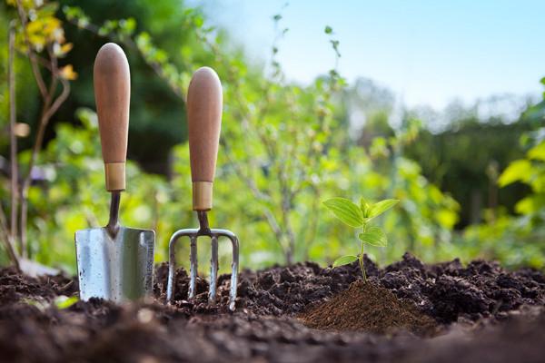 Uređenje i njega vrta u srpnju