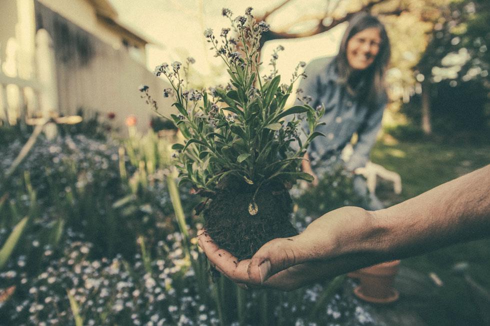 Uređenje i njega vrta u rujnu