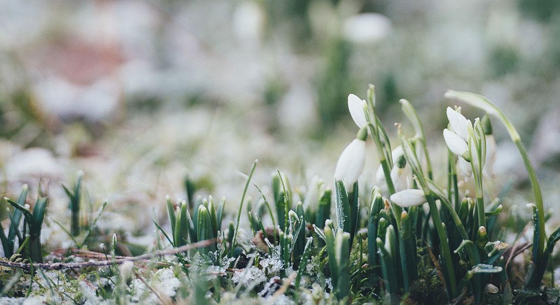 Uređenje i njega vrta u ožujku