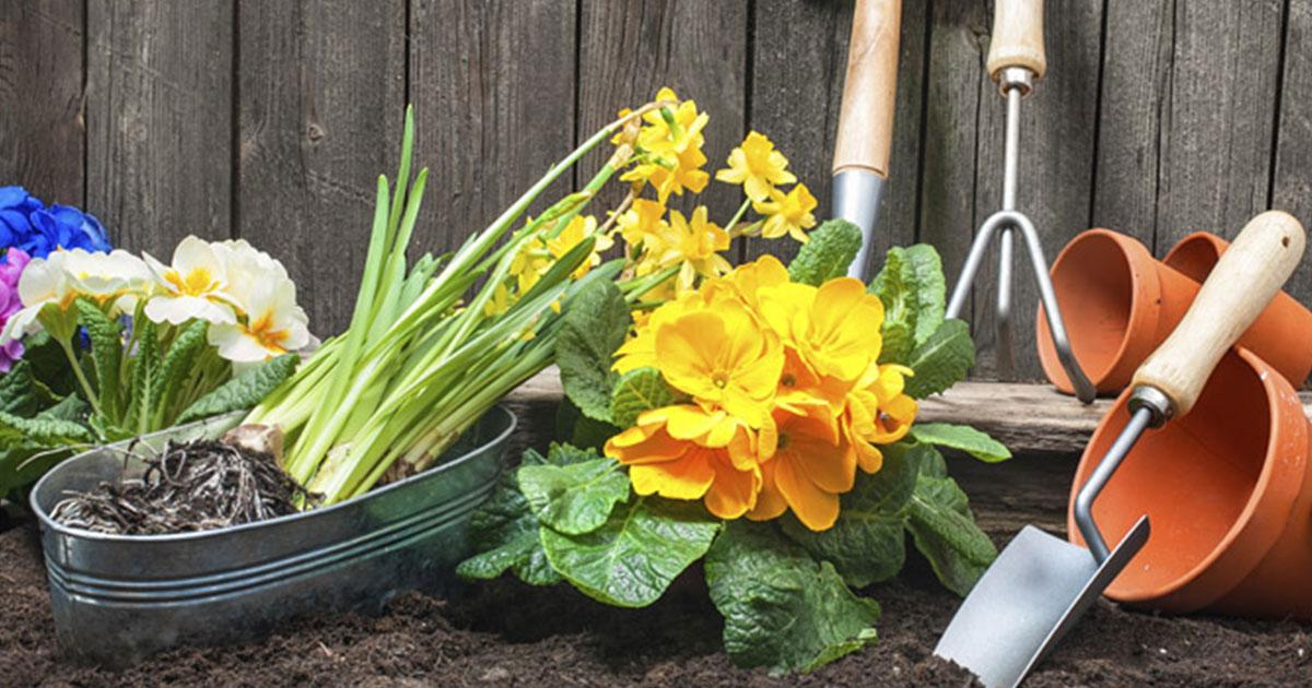 Uređenje i njega vrta u travnju