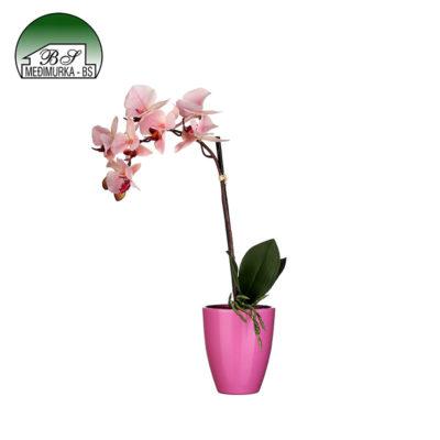 Umjetna biljka rozna Orhideja